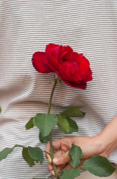 Vrouw Verbergt Een Rode Roos Voor Valentijn Cadeau Foto