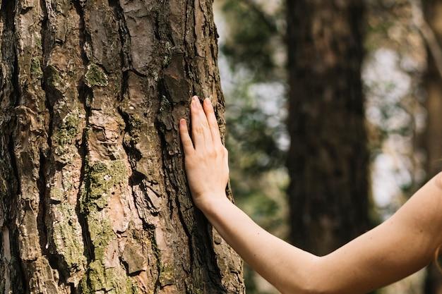Vrouw wat betreft boom met hand Gratis Foto