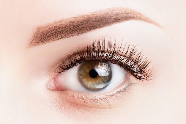 Vrouwelijk oog met lange wimpers. klassieke wimperuitbreidingen en lichtbruine wenkbrauwclose-up. Premium Foto