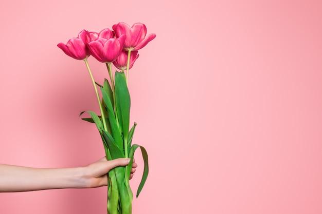 Vrouwelijke arm houdt een boeket van roze tulpen geïsoleerd op een lichtroze achtergrond Premium Foto