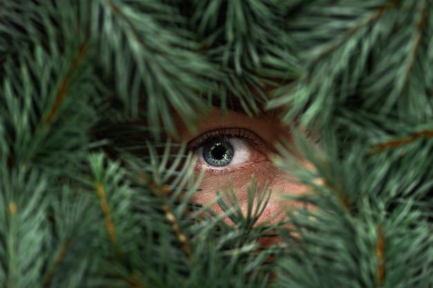 Vrouwelijke blauwe ogen met wimpers kijkt door groene sparren takken. Premium Foto