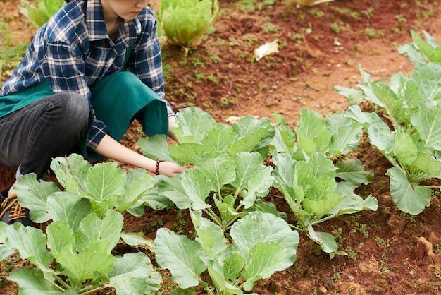 Vrouwelijke boer aanraken van koolbladeren Gratis Foto
