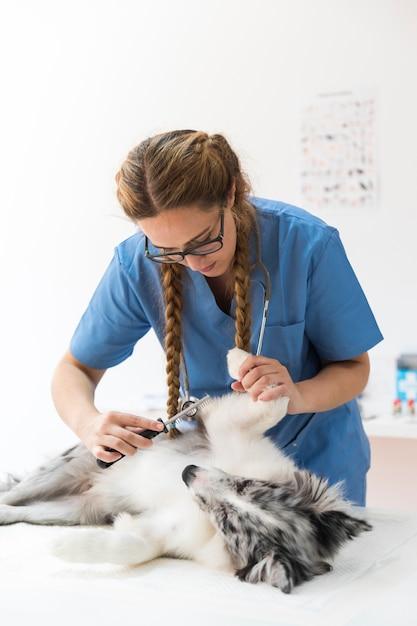 Vrouwelijke dierenarts die hond voor vlo met kam onderzoekt Gratis Foto