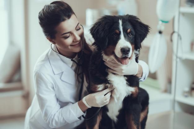 Vrouwelijke dierenarts knuffelen sennenhond hart onderzoeken Premium Foto