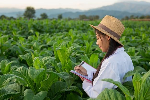 Vrouwelijke onderzoekers onderzochten tabaksbladeren Gratis Foto