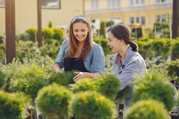 Vrouwen die in een serre met groene bomen werken Gratis Foto