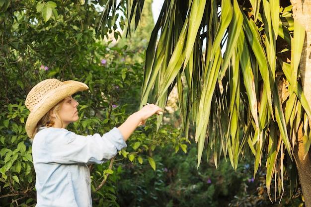 Vrouwen scherpe bladeren van boom Gratis Foto