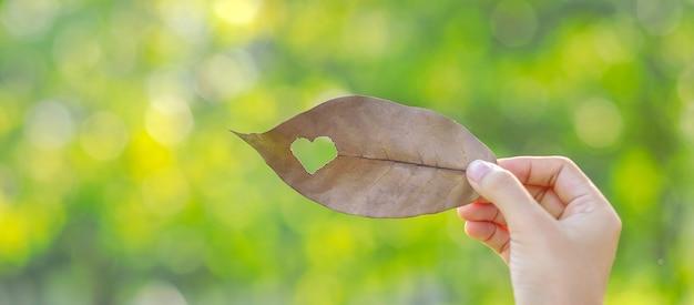 Vrouwenhand die droog blad met hartvorm houden op groene natuurlijke achtergrond Premium Foto