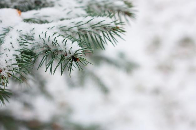 Vuren takken met sneeuw Premium Foto