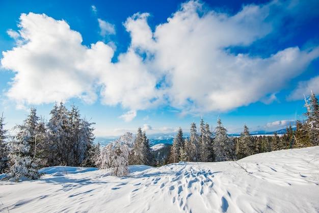 Vuren winterbos met uitzicht op de bergen Premium Foto