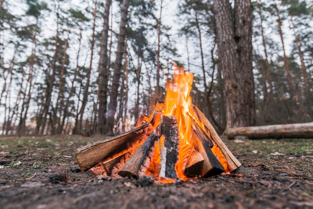 Vuur met lage hoek Gratis Foto
