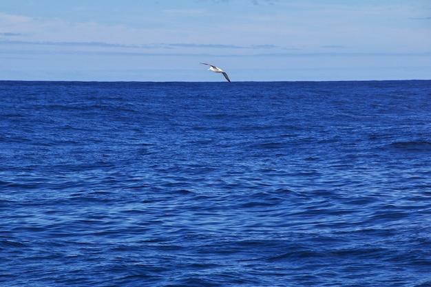 Walvissafari in kaikoura, nieuw-zeeland Premium Foto