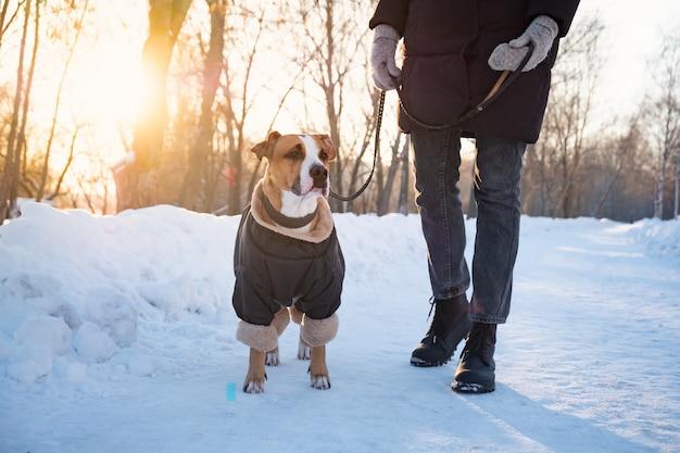 Wandelen met een hond op koude winterdag. persoon met een hond in warme kleding aan de leiband in een park Premium Foto