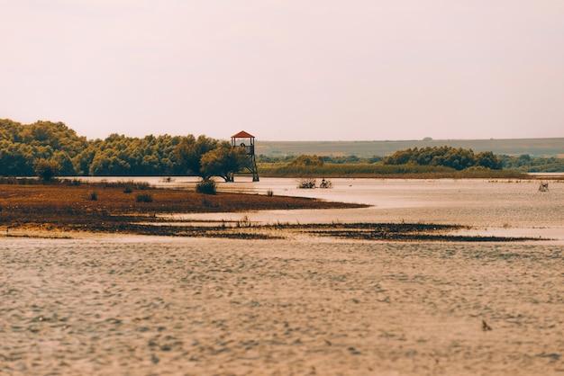 Warme zomerdag in de buurt van meer en boslandschap Premium Foto