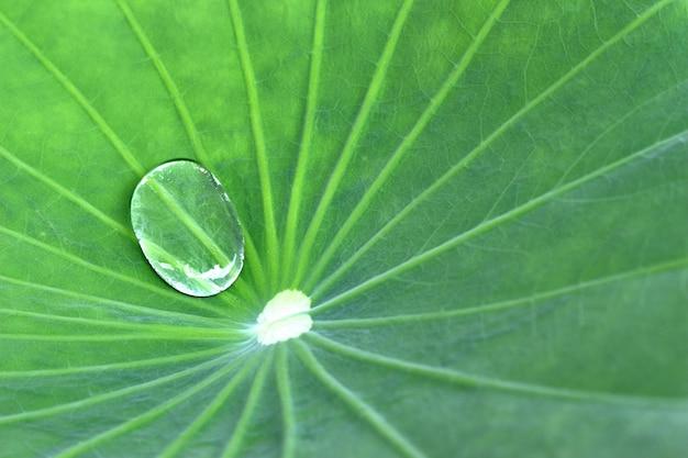 Water op lotusblad Premium Foto