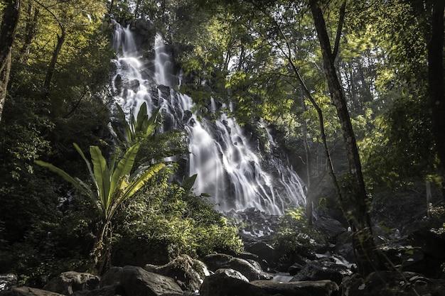Waterval die door het bos komt, omringd door bomen Gratis Foto