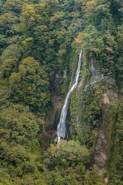 Waterval in het bos, landschapsmening van kokonoe yume van hangbrug kokonoe yume Premium Foto