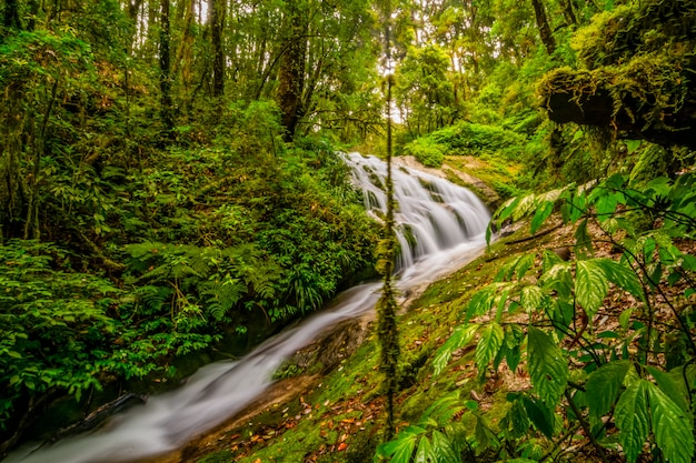 Waterval in het nationale park van doi inthanon, thailand Premium Foto