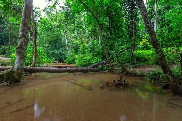 Waterval in regenwoud, pa wai waterfall, tak province, thailand Premium Foto