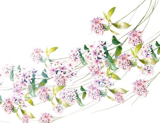 Waterverf het schilderen van bladeren en bloem, op wit Premium Foto