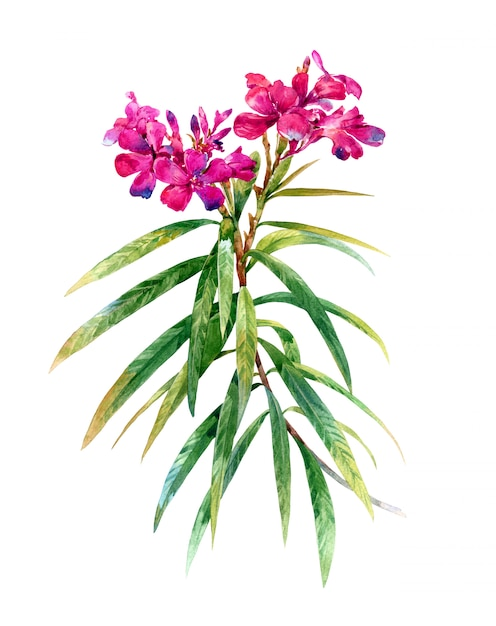 Waterverfbladeren en bloem Premium Foto