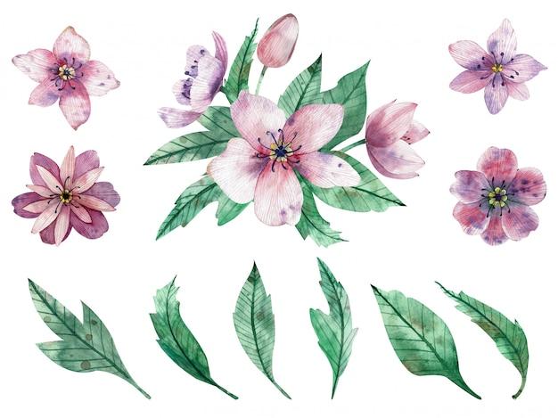 Waterverfillustratie van roze bloemsamenstellingen en elementen Premium Foto