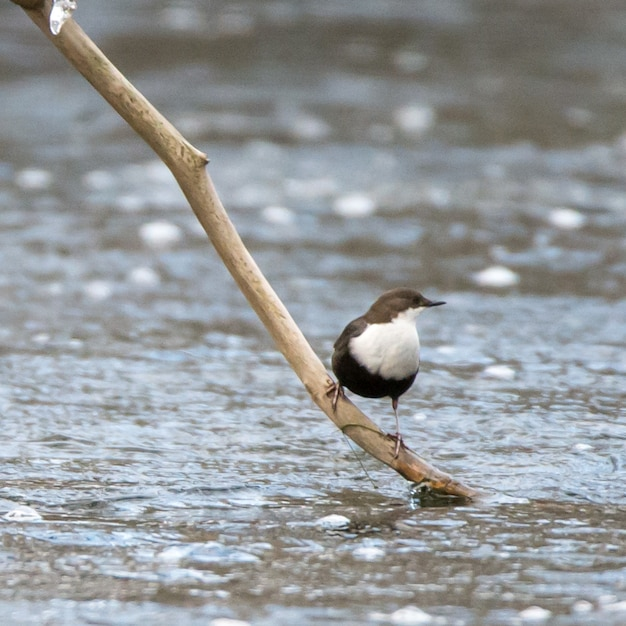 Watervogel zat op de tak van een boom Gratis Foto