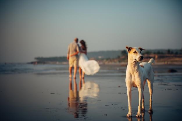 Wazig beeld van gelukkige paar wandelen op het strand. op de voorgrond staat een hond op het zand. man en vrouw in een omhelzing worden langs de kust verwijderd. vakantie concept Premium Foto