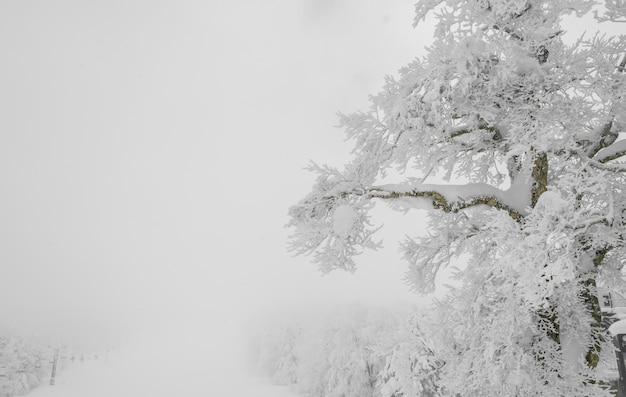 Weer Park Overdekte Bergen Foto Gratis Download