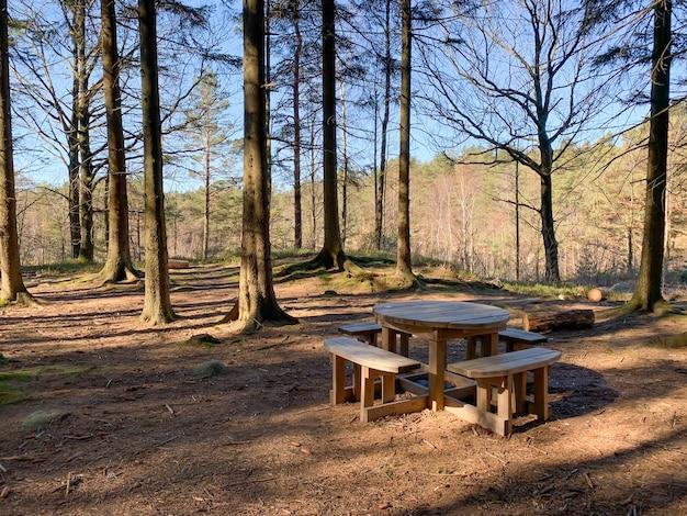 Weergave van een lege houten tafel en banken in een bos met hoge oude bomen op een zonnige dag Gratis Foto