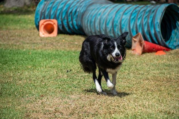Weergave van een zwart-witte hond die in een park speelt dat op een zonnige dag wordt vastgelegd Gratis Foto