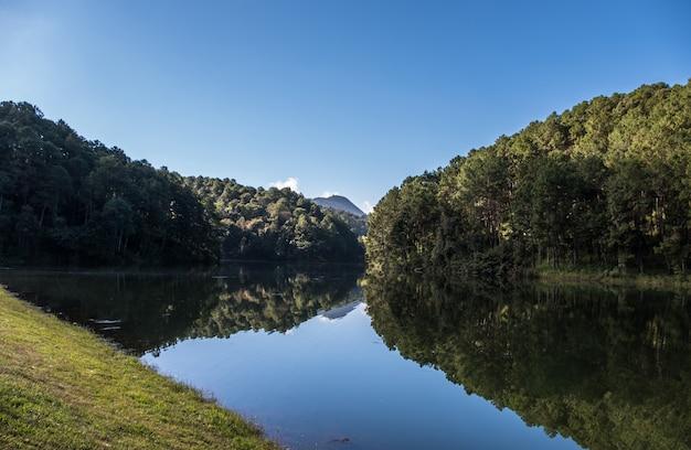 Weerspiegeling van het dennenbos op het heldere water. Premium Foto