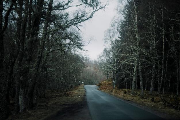 Weg in de winter plaats Gratis Foto
