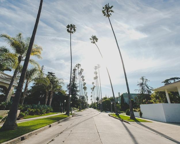 Weg in het midden van gebouwen en palmbomen onder een blauwe bewolkte hemel Gratis Foto