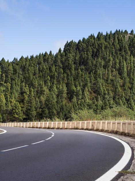 Weg met prachtig bomenlandschap Gratis Foto