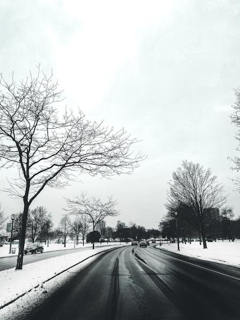Weg omgeven door bomen en auto's bedekt met sneeuw met gebouwen Gratis Foto