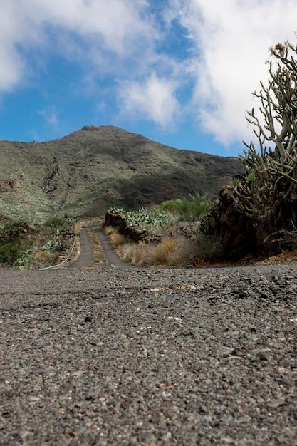 Weg omhoog op een tropische heuvel Gratis Foto