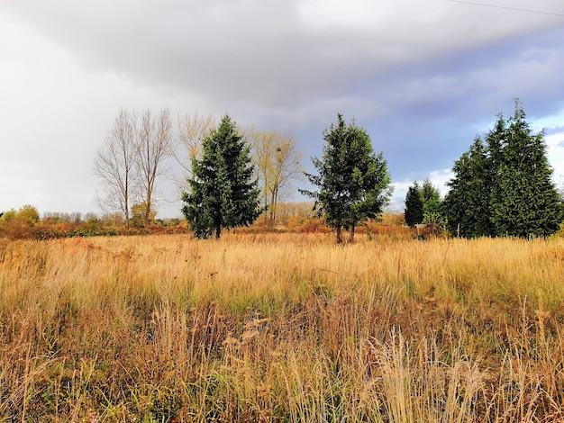 Weide bedekt met het gras en de bomen onder een bewolkte hemel tijdens de herfst in polen Gratis Foto