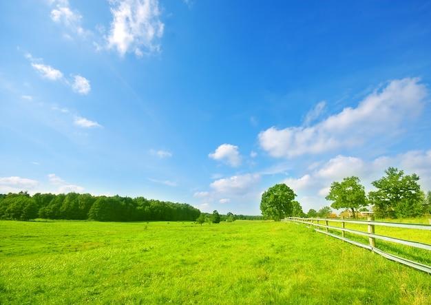 Weide met bomen en een houten hek Gratis Foto