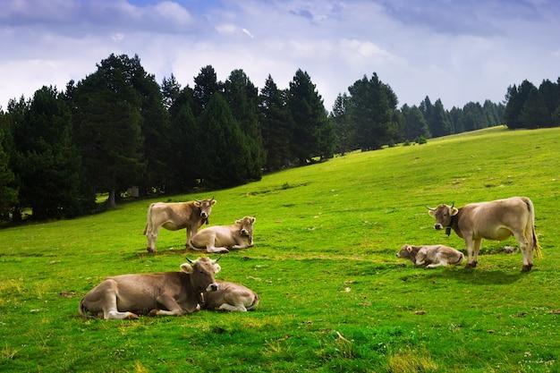 Weide met koeien Gratis Foto