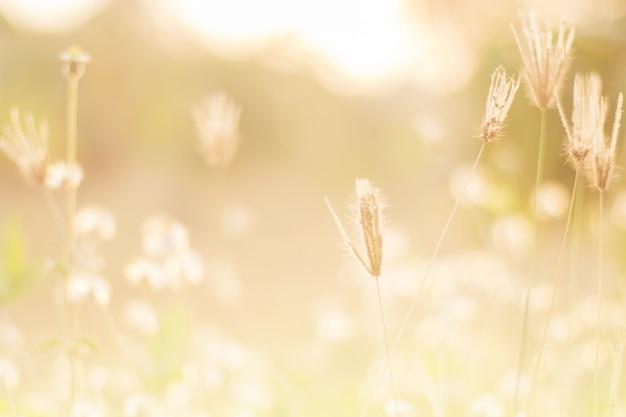 Weidebloemen in vroege zonnige verse ochtend. Premium Foto