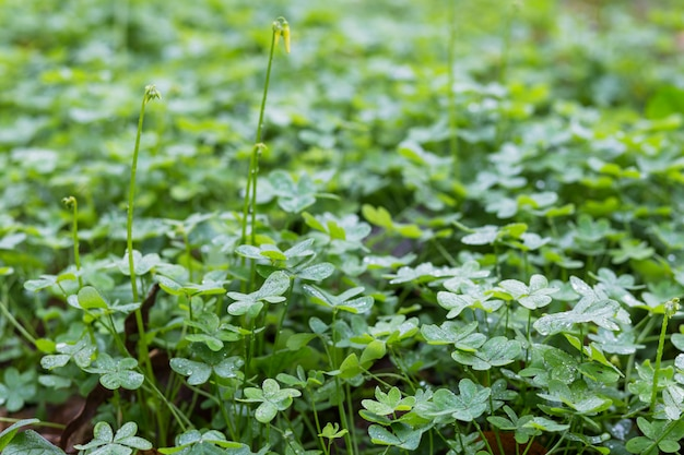 Weiland van groene installaties met dauw Gratis Foto