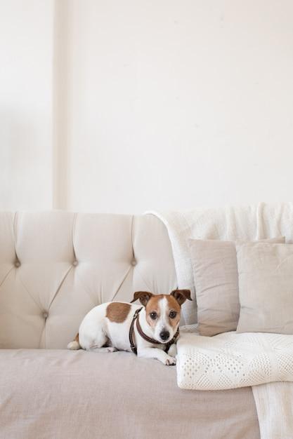 Weinig hondje op de bank Premium Foto