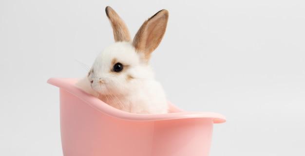 Weinig witte konijnzitting op roze badkuip met geïsoleerde witte achtergrond bij studio. Premium Foto