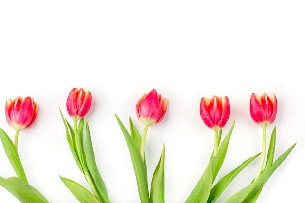 Wenskaart met frame van verse tulpen op witte achtergrond. achtergrond voor dames, moeders, valentijnsdag, verjaardag en andere evenementen. plat lag mockup voor uw belettering of kopie ruimte voor tekst Premium Foto