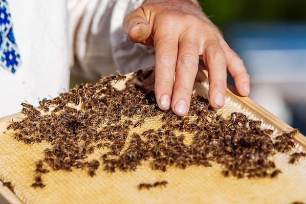Werkende bijen op honingraat. frames van een bijenkorf. bijenteelt Premium Foto