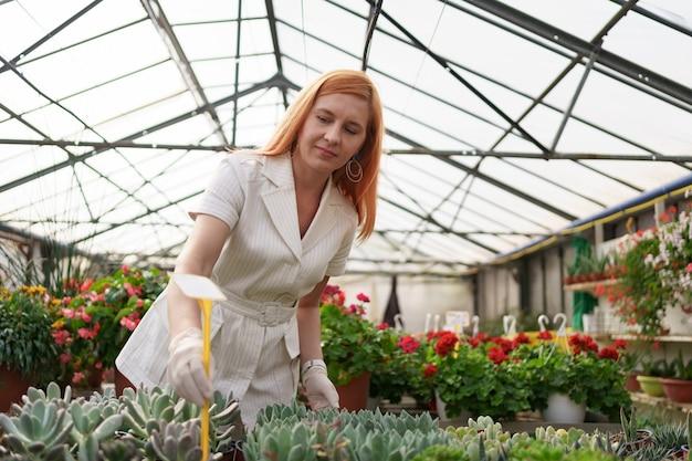 Werknemers volgen de groei en ontwikkeling van vetplanten in de kas Gratis Foto