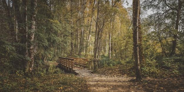 Wide shot van een houten brug in het midden van een bos met groene en gele bladeren bomen Gratis Foto