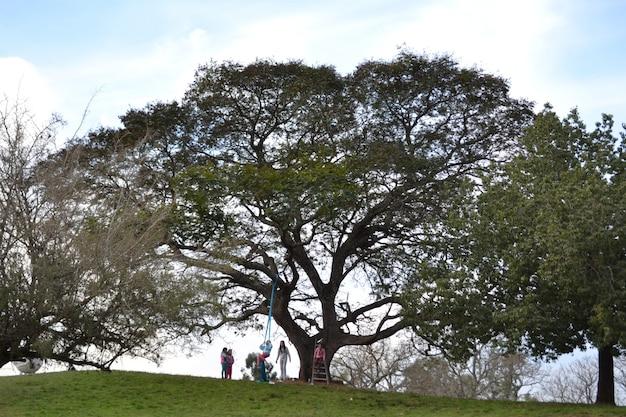 Wijd geschoten van mensen die van een tak van de levensboom slingeren Gratis Foto