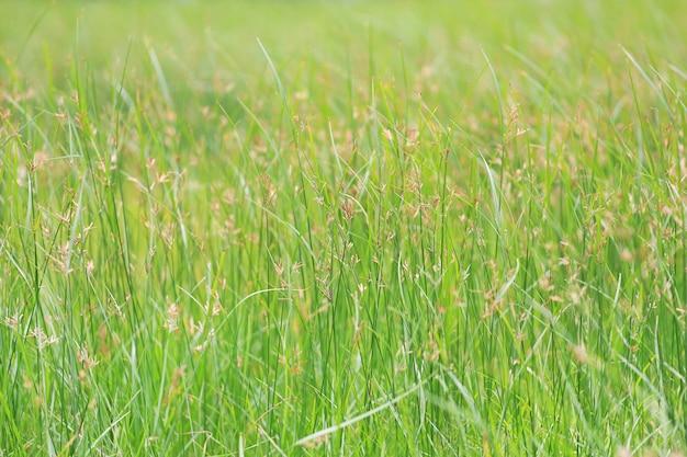 Wild gras op groene aardachtergrond. Premium Foto